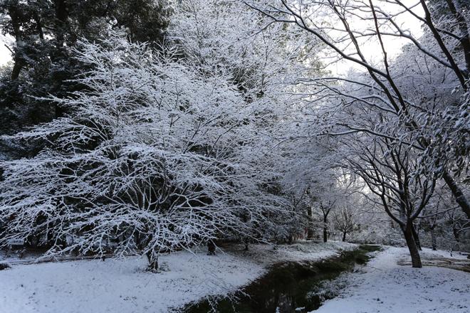 糺の森 奈良の小川