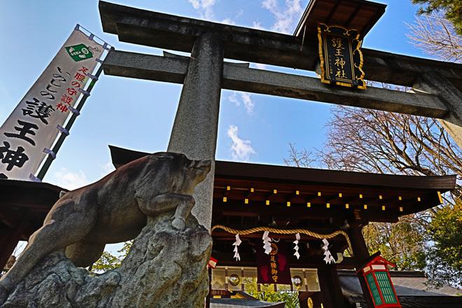 護王神社 入口の鳥居と狛猪