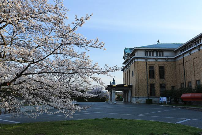 京都市美術館の桜