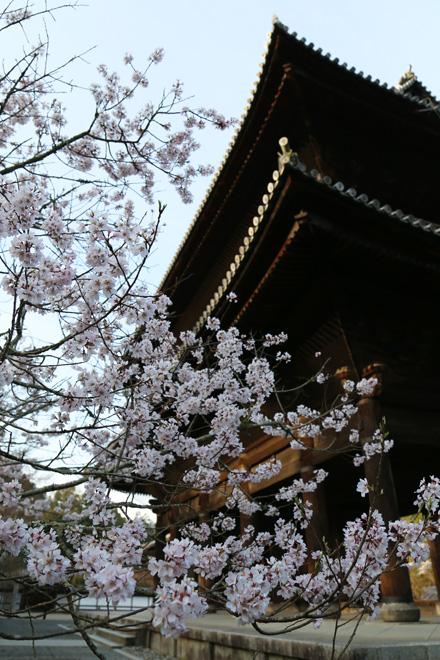 南禅寺の三門と桜