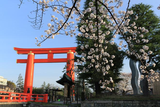岡崎疎水から平安神宮参道の大鳥居を望む
