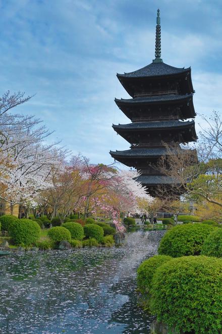 東寺 桜と五重の塔