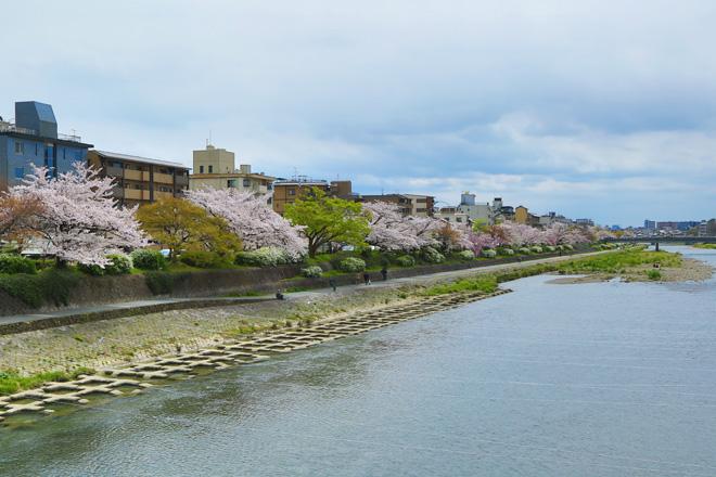 鴨川の桜 ~団栗橋から五条大橋を望む~