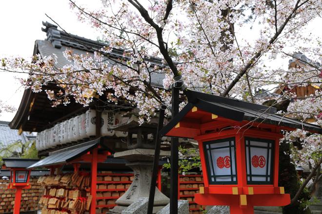安井金比羅宮の桜