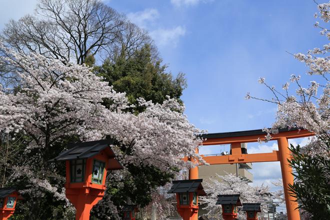 平野神社の桜