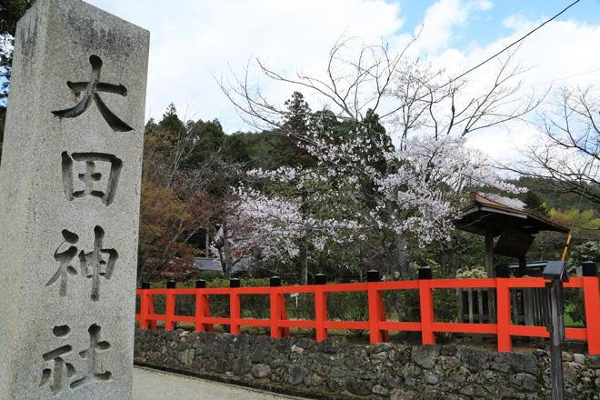 大田神社の桜