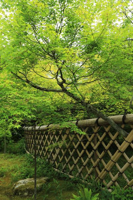 新緑の光悦寺