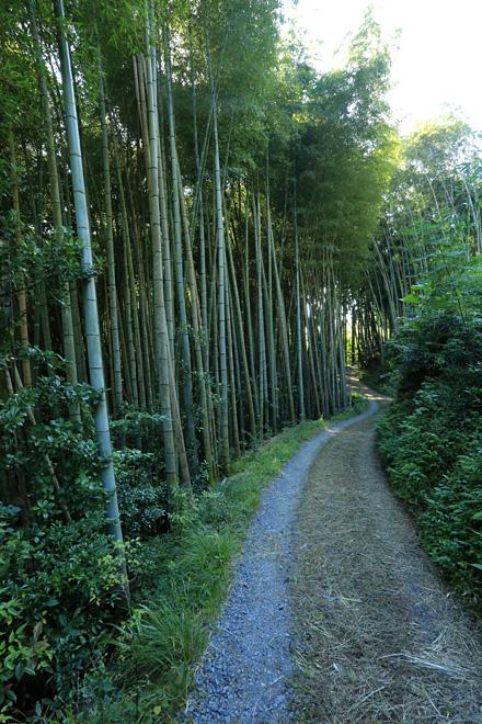 なんやかんや大原野 フジバカマ祭り入口の竹藪の小路