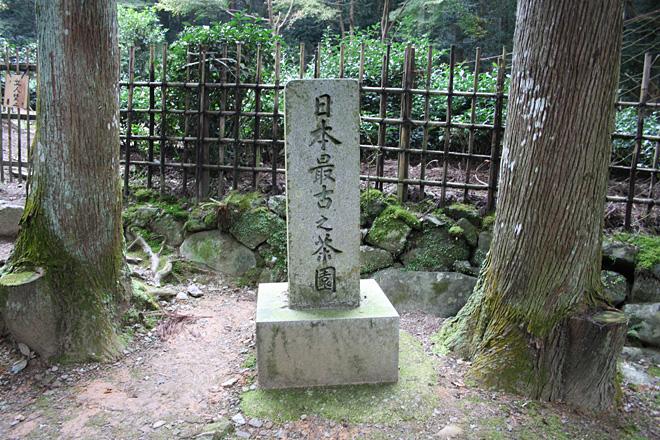 高山寺 日本最古之茶園