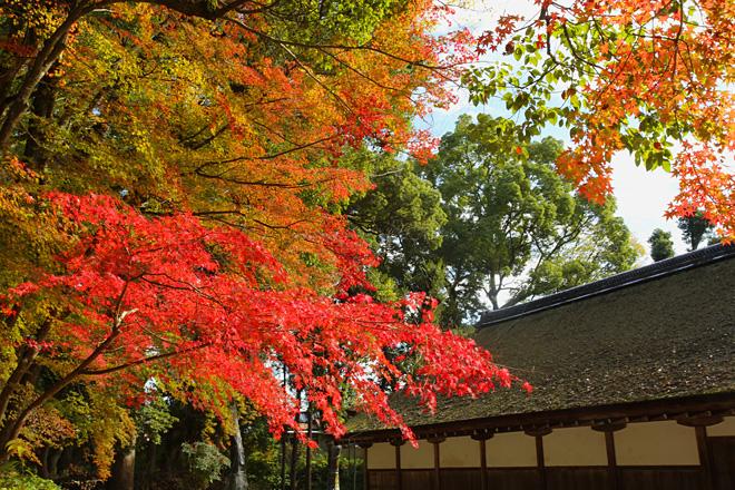 上賀茂神社にて