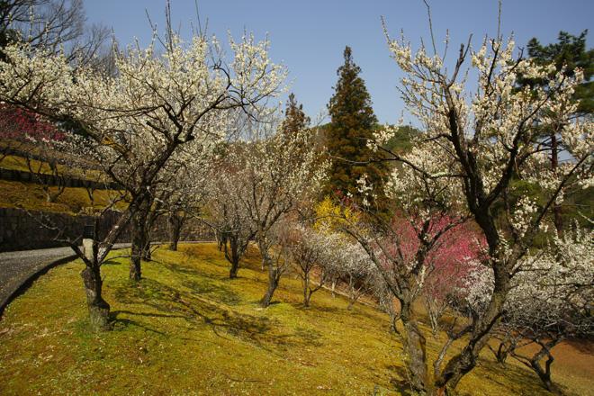 宝ヶ池の梅林園にて