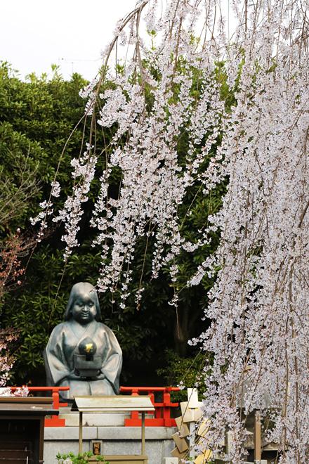 千本釈迦堂の阿亀桜(おかめざくら)