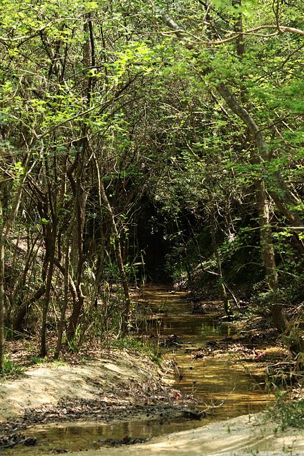 木津川市のある森の風景